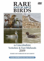 Rare and Scarce Birds in Lincolnshire, Yorkshire & East Midlands 2009